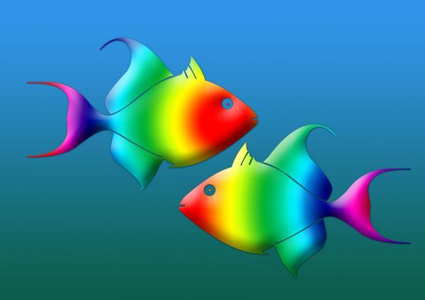 Pesciolini colorati designs a cura di john vito figorito for Immagini pesciolini